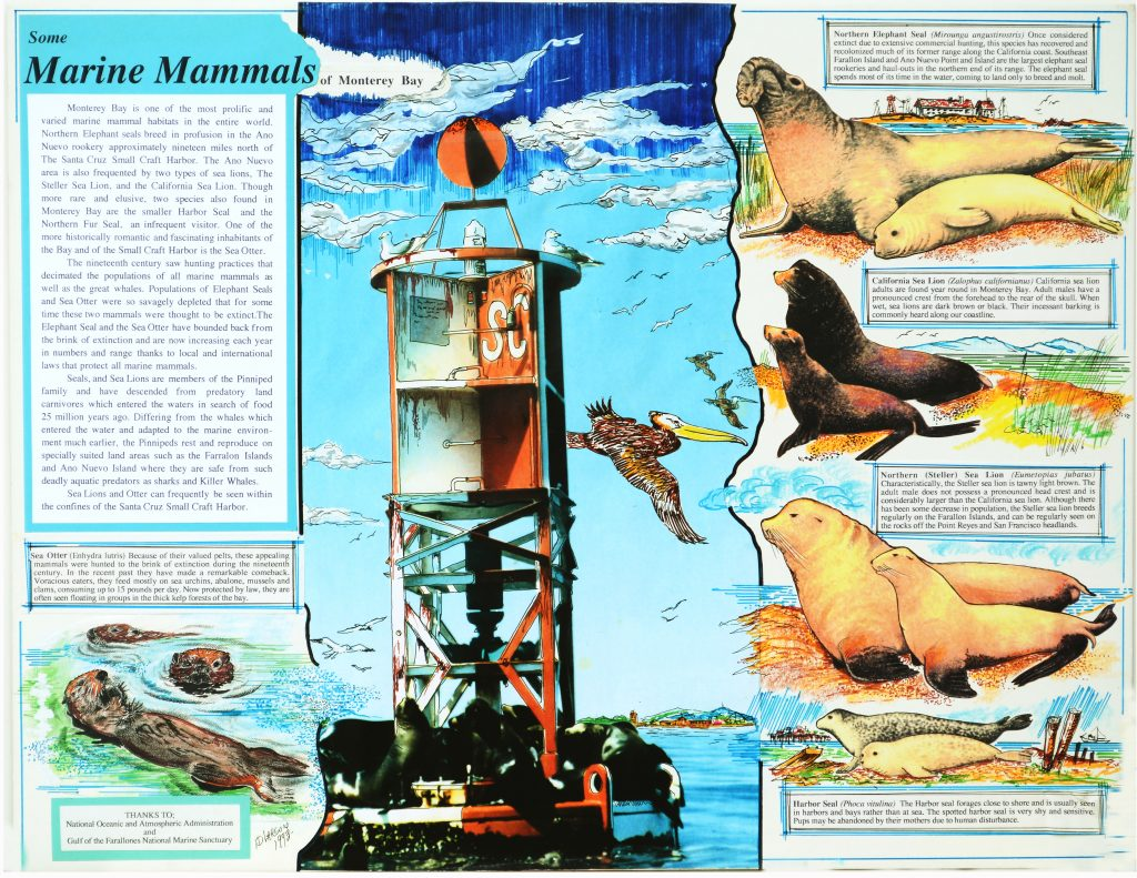 Ed Larson's artwork on Marine Mammals